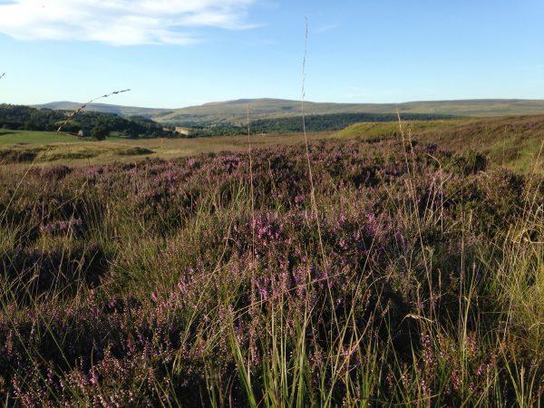 heather moorland