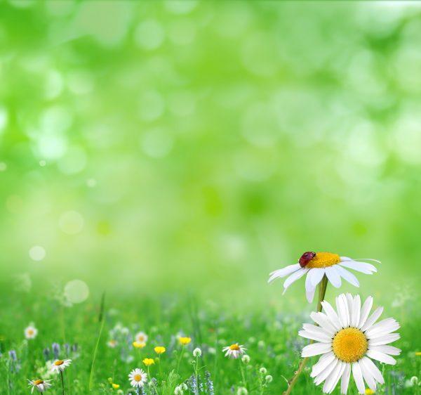 wildlife-daisies