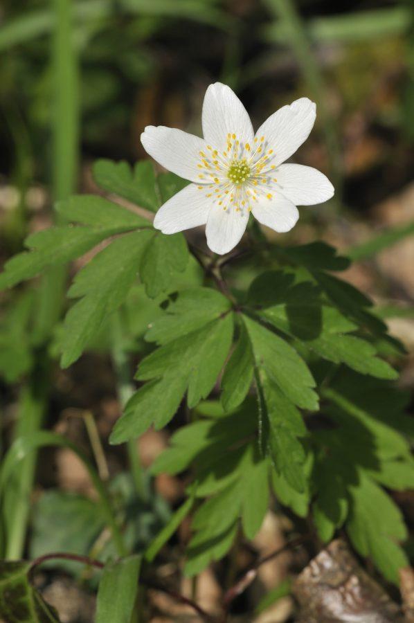 wildlife-flower