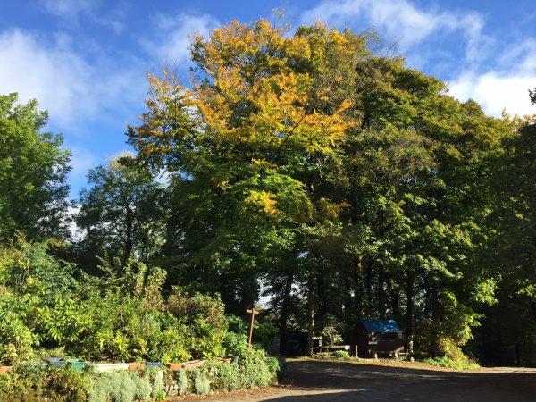 woodnook-autumn-colours-7