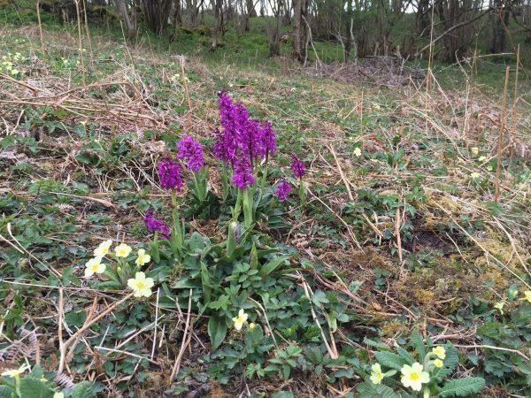 woodnook woodland flower3